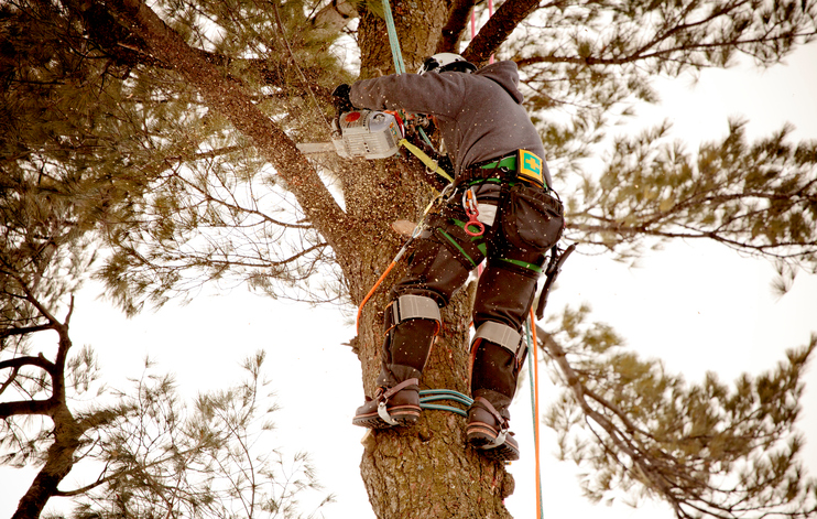 Arboriculteur - Émondage SBP