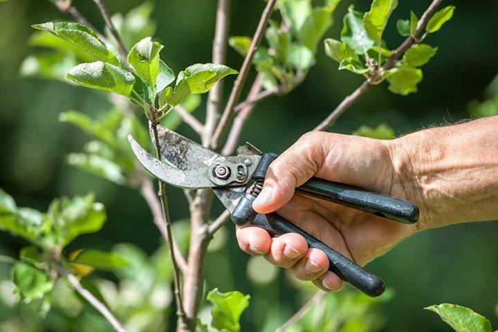 Taille des arbres - Émondage SBP