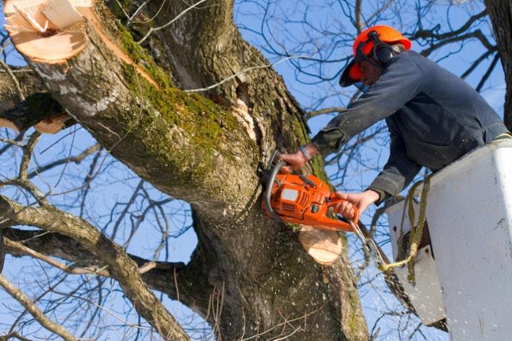 Pruning - Émondage SBP