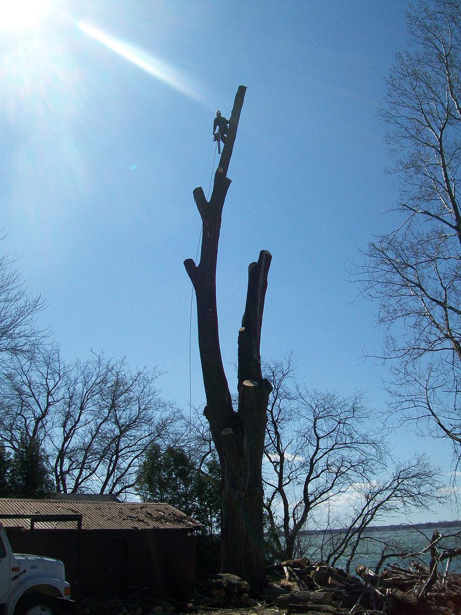 Arboriste grimpeur abattant un arbre