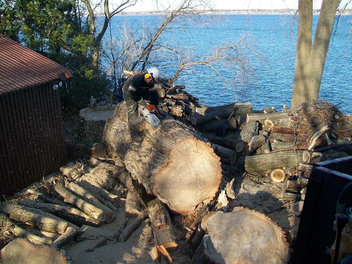Abattage et découpe de l'arbre