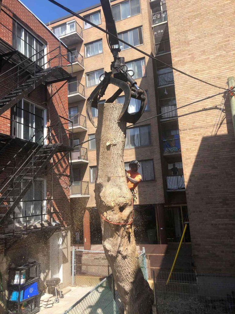 abattage d'arbre avec accès restreint