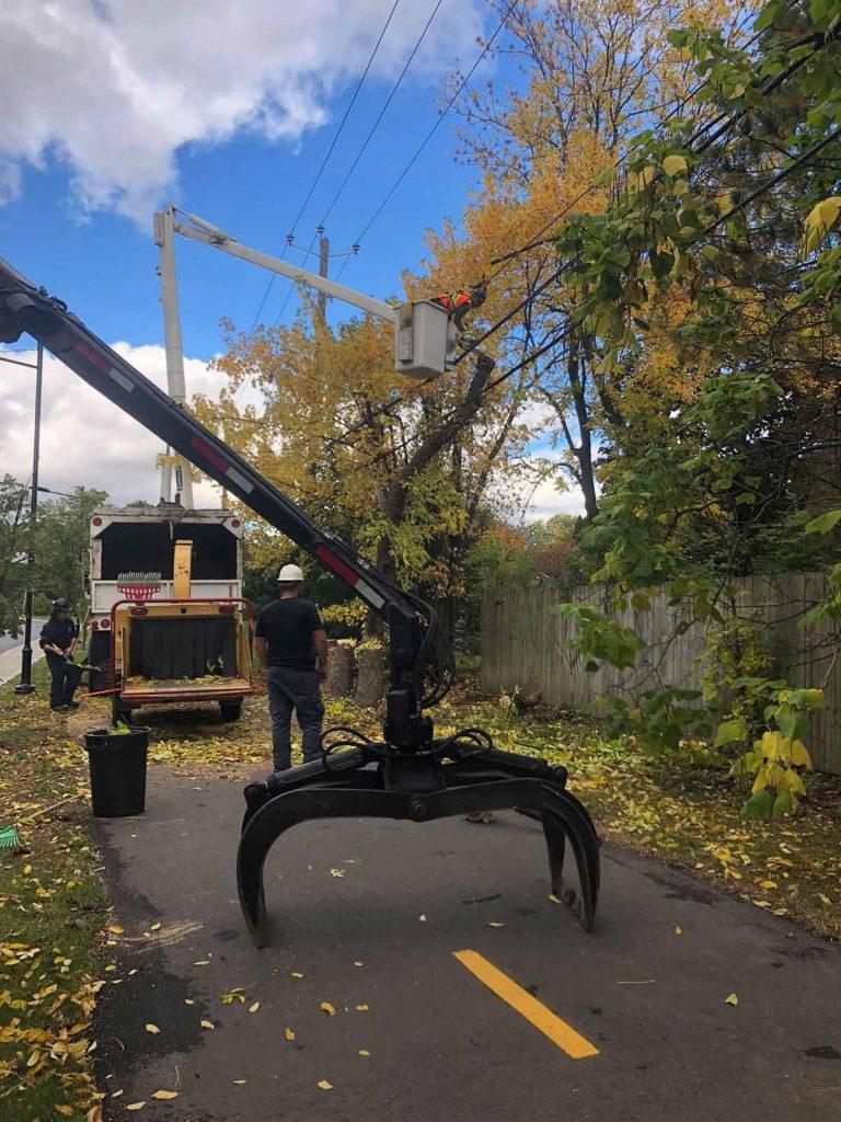 abattage d'un arbre près des fils électriques