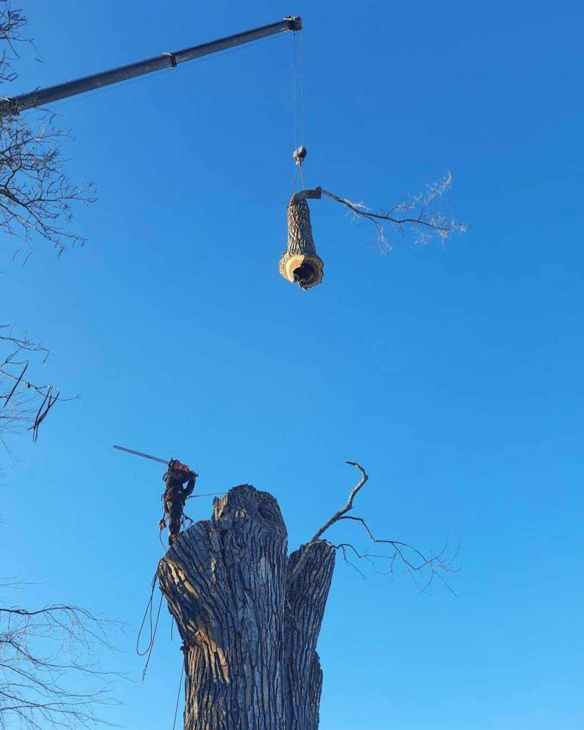 abattage d'arbre avec une grue