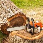abattage d'un arbre sur la Rive-Sud de Montréal