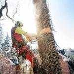 abattage d'arbre - rive-sud de Montréal