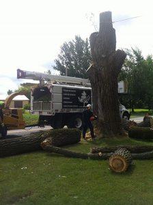 abattage d'arbre avec l'aide d'une nacelle