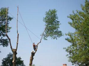 Découpage d'arbre en hauteur