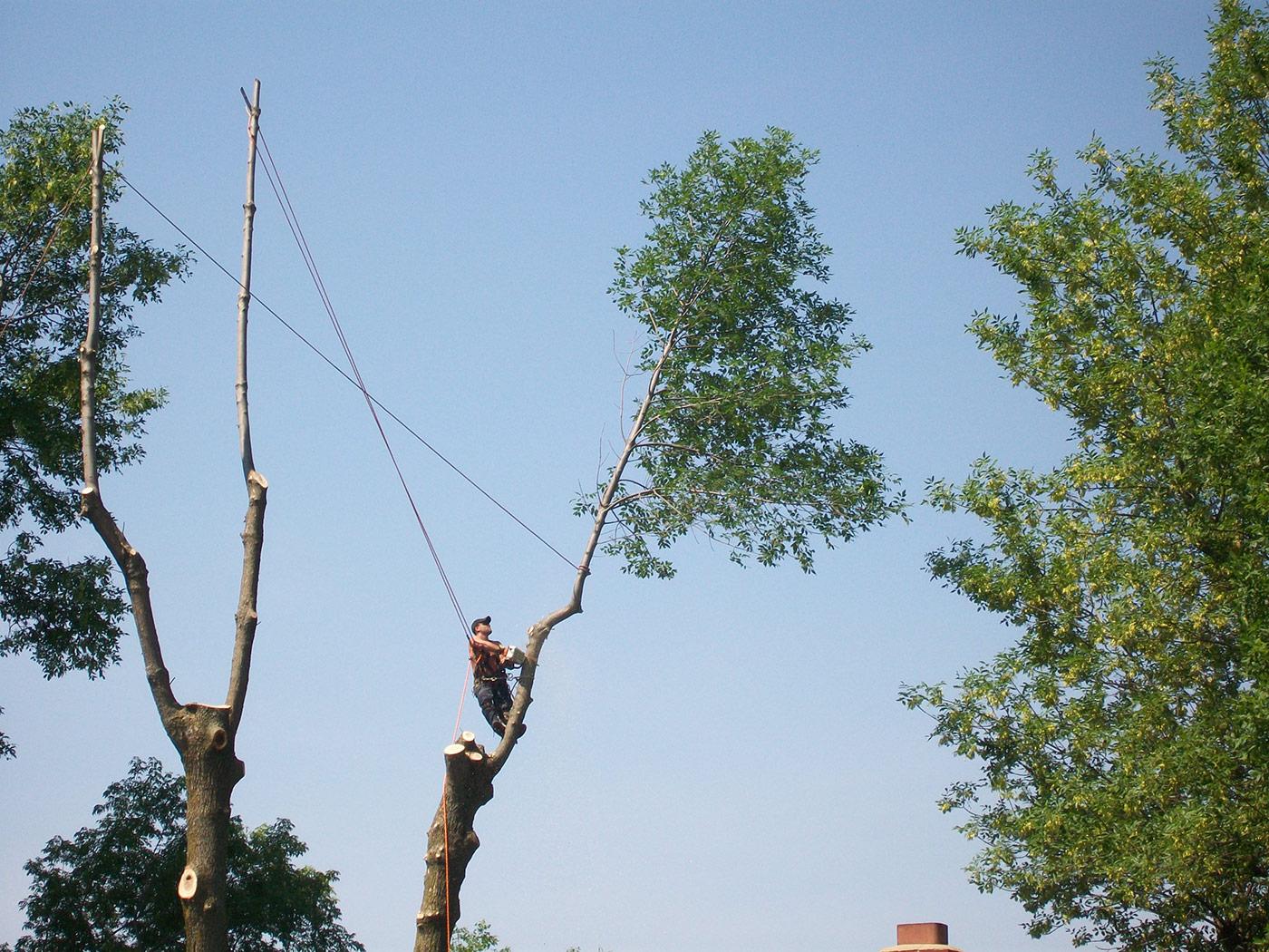 Découpage d'arbre en hauteur par arboriculteur certifié