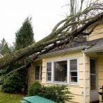 arbre tombé sur la maison à cause du vent