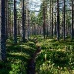 arbres et arbustes - Émondage SBP