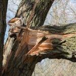branche d'arbre cassée