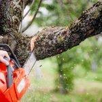 Couper des branches d'arbres