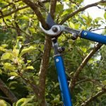 entretien arbres