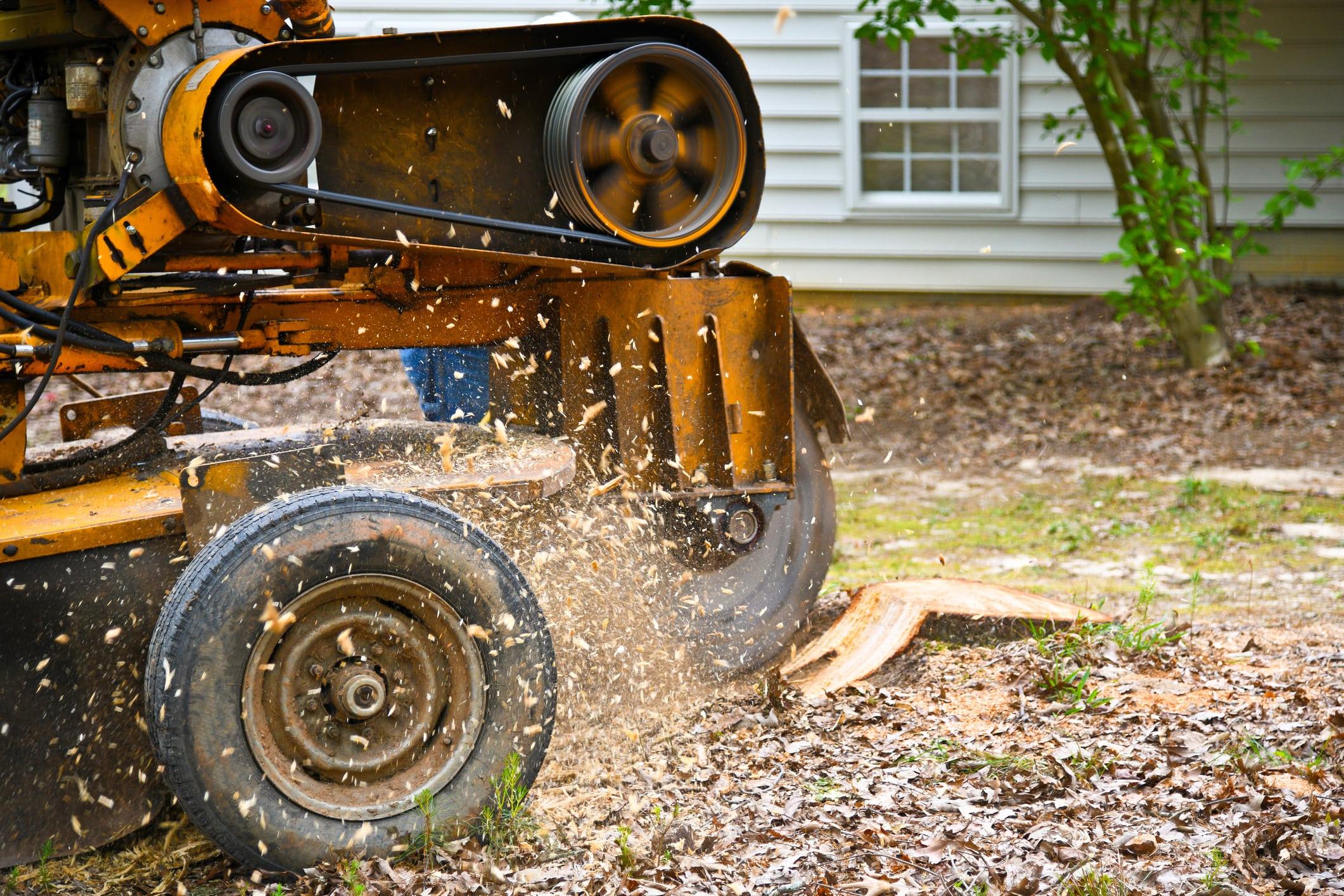 Le processus pour l'essouchement d'un arbre