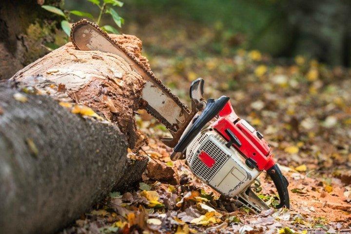 felling cut - Émondage SBP