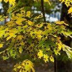 traitement arbre malade