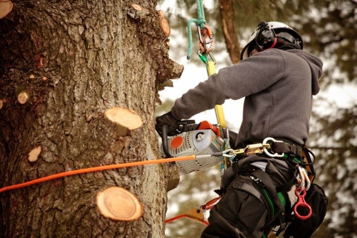Tree pruning techniques - Émondage SBP